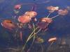 kew-lilies-web