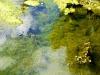 pond-web-3