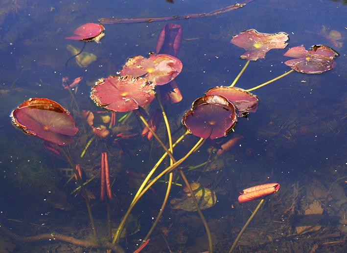 Pond life at Kew